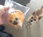 13 perros que se parecen a otra cosa, menos a sus dueños