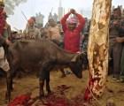 La mayor matanza de animales ha comenzado en Nepal