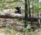 Antes de morir fotografió al oso que lo asesinó