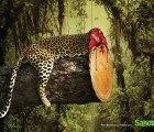 Impactante campaña contra la deforestación