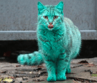 Video: El misterioso gato verde de Bulgaria