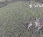Canguro knockea a drone en pleno vuelo