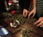 Legalizarán marihuana para consumo personal en Jamaica