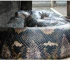 No creerán lo que había en el estómago de esta serpiente gigante