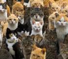 Así luce en realidad la isla de los gatos de 1Q84 de Murakami