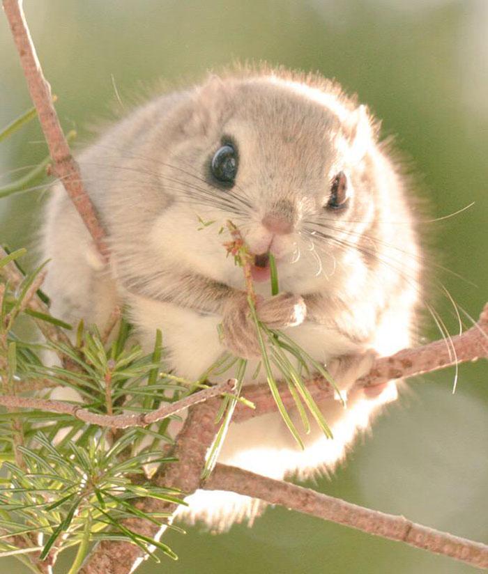 cute-animals-hokkaido-ezo-japan-25