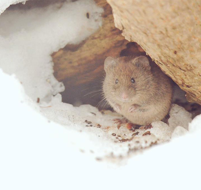 cute-animals-hokkaido-ezo-japan-44