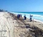 Cancún es atacada por pulgas marinas