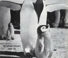 Las mejores portadas con animales de la revista LIFE