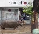 Jumanji en la vida real:  animales se fugan de zoológico por tormentas en Georgia