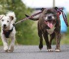 Glenn y Buzz, una hermosa historia de amistad canina