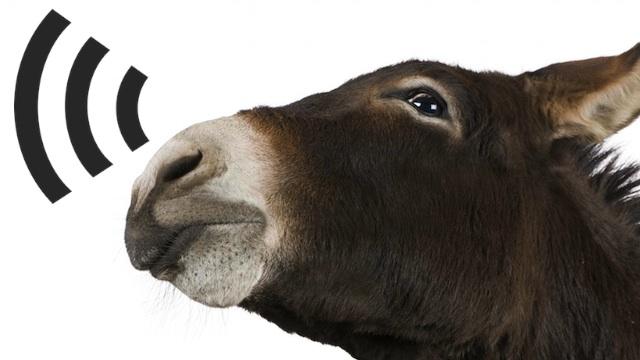 burro-wifi