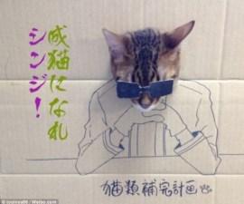 cardboard cat2