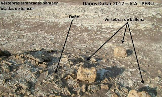 fosiles_dakar_peru_3