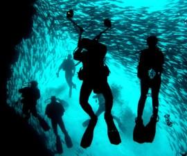 Bosque-prehistorico-en-Golfo-de-Mexico