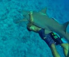 abrazo_tiburon_1