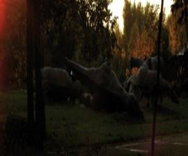 regreso_dinosar