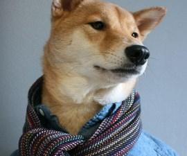 perro3