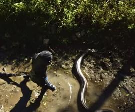 anaconda-discovery03