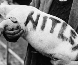 cerdo_hitler