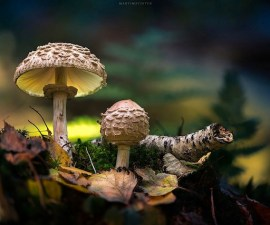 mushrooms-martin-pfister-9