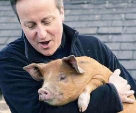david cameron cerdo
