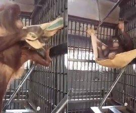orangutan-bed_3535059b
