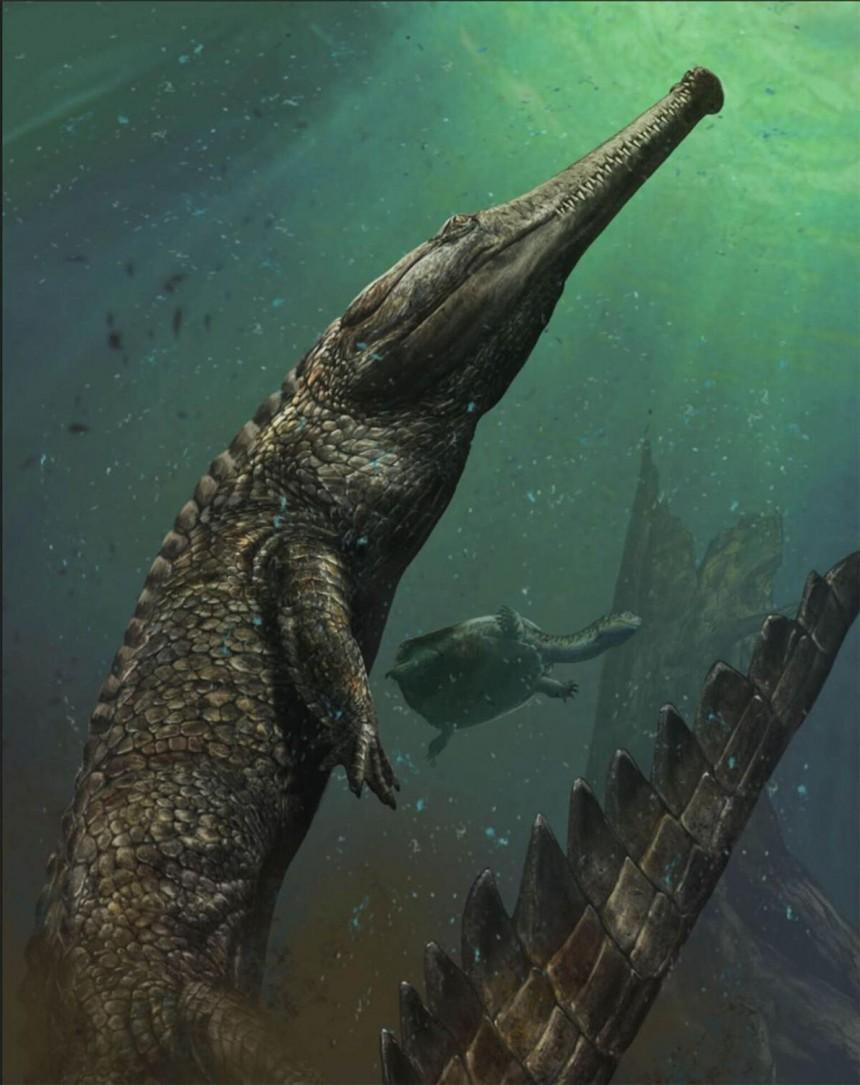 Encuentran el cocodrilo mas grande de la historia