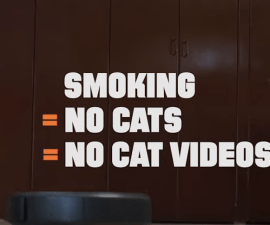 gatitos_fumano