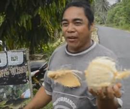pelar coco