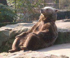 oso-chill