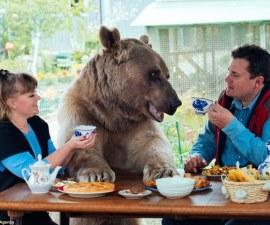 oso-ruso-1