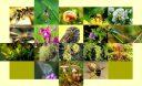 plantas-animales-1