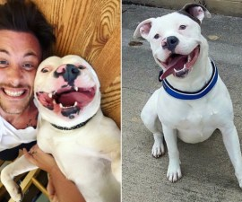 adorable-smile-dog-on-death-row