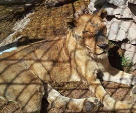 leona-muere-chapultepec