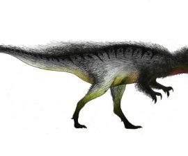 megaraptor-apariencia
