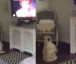 perrito-bailando