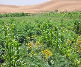 Científicos chinos aseguran haber creado un método para convertir la arena en suelo fértil