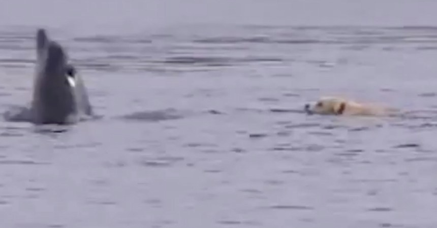ben-duggie-perrito-delfin