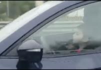 Niño manejando en Monterrey