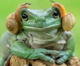 La rana que se parece a Leia
