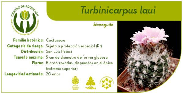 plantas-mexicanas-en-adopcion