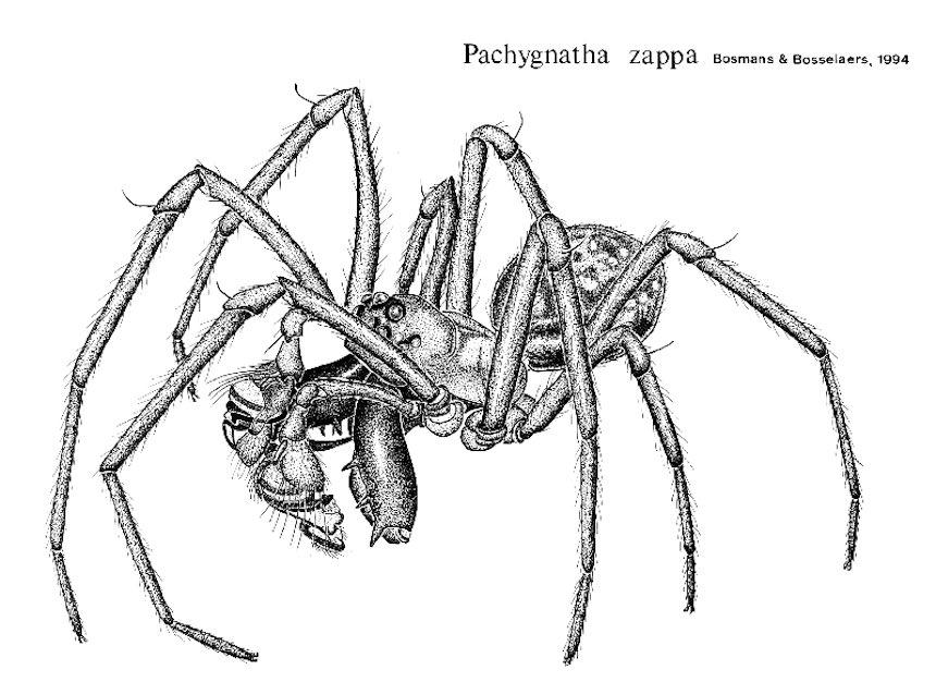 Araña - Frank Zappa
