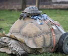 bert-tortuga-rueditas