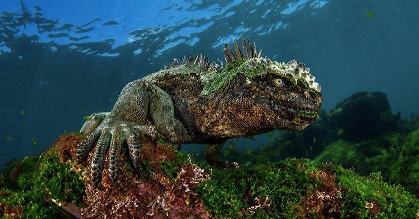 concurso-iguana