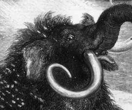 Dibujo de un mamut