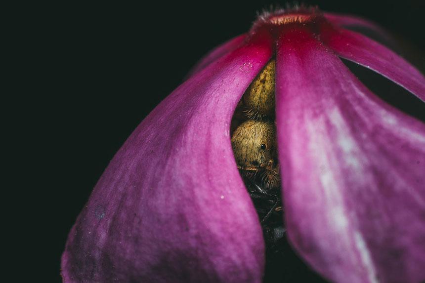 Smithsonian Magazine - Araña