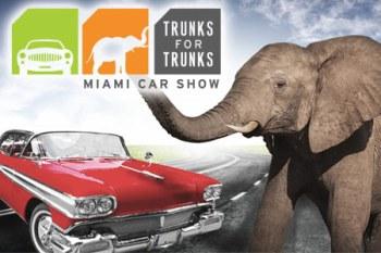trunksfortrunks.jpg