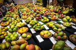 Mango-Festival-73