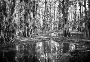 "Clyde-Butchers-Gator-Hook-1-–-2009-–-Big-Cypress-National-Preserve-silver-gelatin-photograph-–-40""x60"""